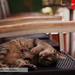 кошка на кресле около кафе